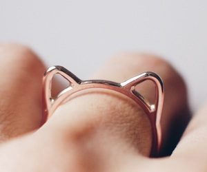 cat, cute, and ring image
