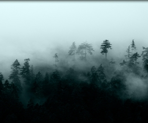 forest, trees, and mist image