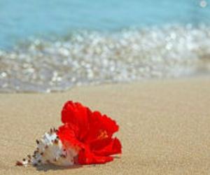 beach, shell, and beautiful image