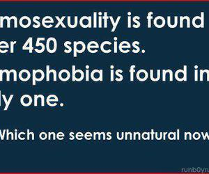 gay, noh8, and homosexuality image