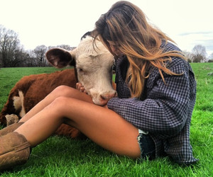 animals, country, and cow image