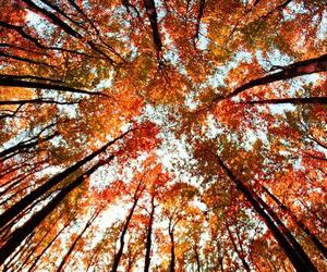 fall, tree, and autumn image