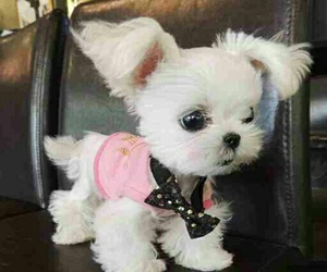 adorable, puppy, and pink sweater image