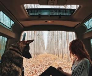dog, nature, and car image