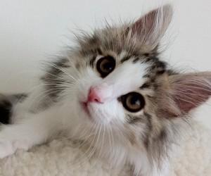 animals, cat, and tumblr image