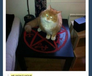 funny, cat, and supernatural image