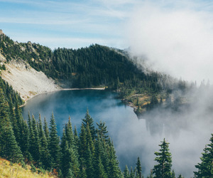 forest, mountain, and nature image