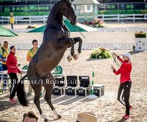 amazing, horses, and triple x image
