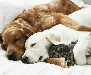and, animals, and sweet image