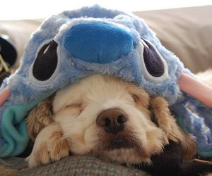 dog, cute, and stitch image