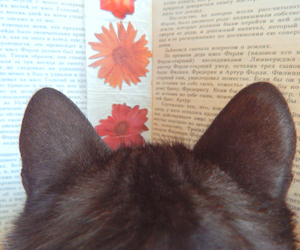 animal, book, and kitten image
