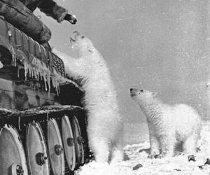 bear, Polar Bear, and snow image