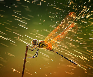 nature, dragonfly, and rain image