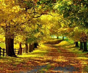 autumn, fall, and path image