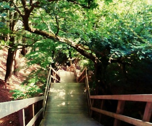 green, stairs, and nature image