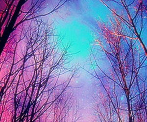 trees, forest, and galaxy image