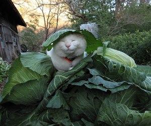 shironeko cat image