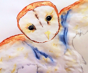animal, faber-castell, and owl image