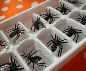 Halloween, spider, and ice image