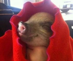 piggy, vegan, and veggie image