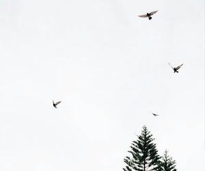 birds, blackandwhite, and free image