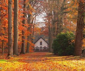 beautiful nature autumn image