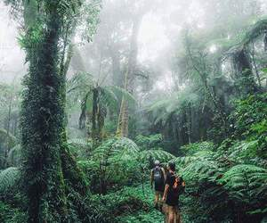 adventure, nature, and green image
