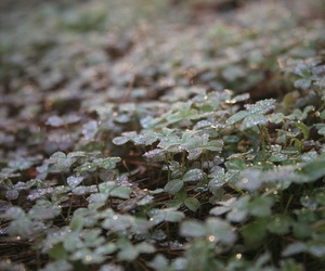 clovers, droplets, and earth image