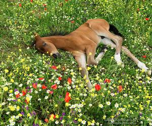 flowers, horse, and animal image
