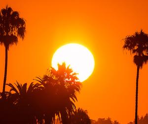 orange, palm trees, and sunset image