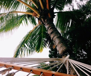 palm trees, relax, and summer image