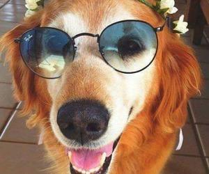 perros image