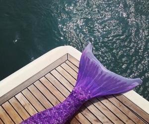mermaid and purple image