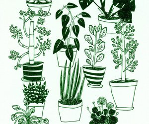 flower, plant, and pots image