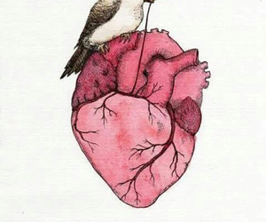 amor, letras, and pajaro image