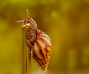 animal, nature, and snail image