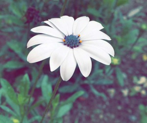 beautiful, flower, and green image