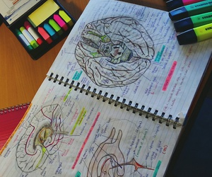 anatomy, art, and medicine image