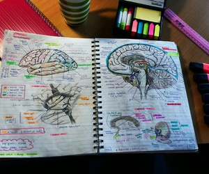 anatomy, study notes, and art image