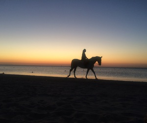 atardecer, beach, and caballo image