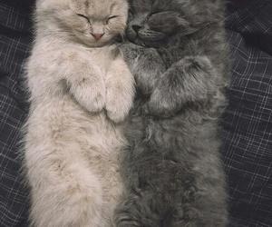 cats sleep, 😴, and çok tatlılar image