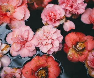flowers, pink, and water image