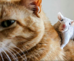 cat, rat, and cute image