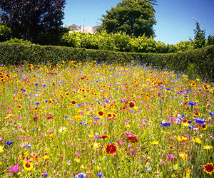 flowers, summer, and wildflowers image