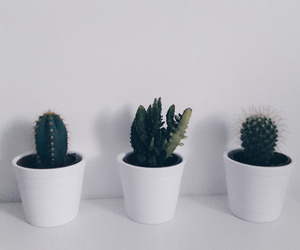 aesthetic, cactus, and pale image
