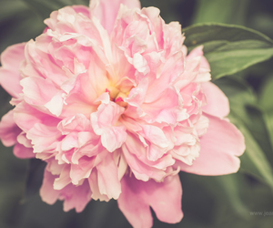 florals, flowers, and macro photography image