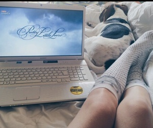 pll, dog, and laptop image