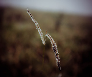 campo, field, and neblina image