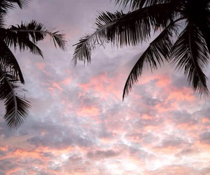 aesthetic, palm trees, and sky image