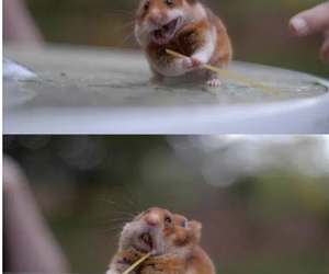hamster, animal, and funny image
